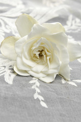Lying down Gardenia Blossom and lace texture