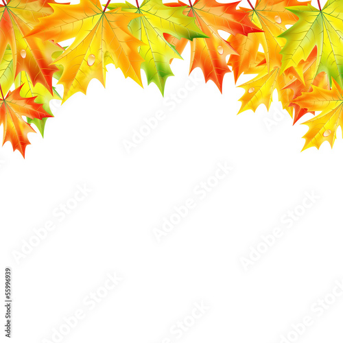 .autumn maple leaves on a white background.autumn background.vec