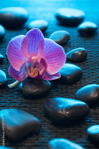 pink orchid and black stones on black mate - blue light