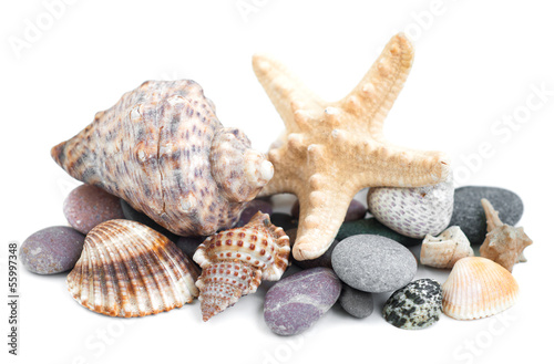Small heap of sea stones and beige cockleshell