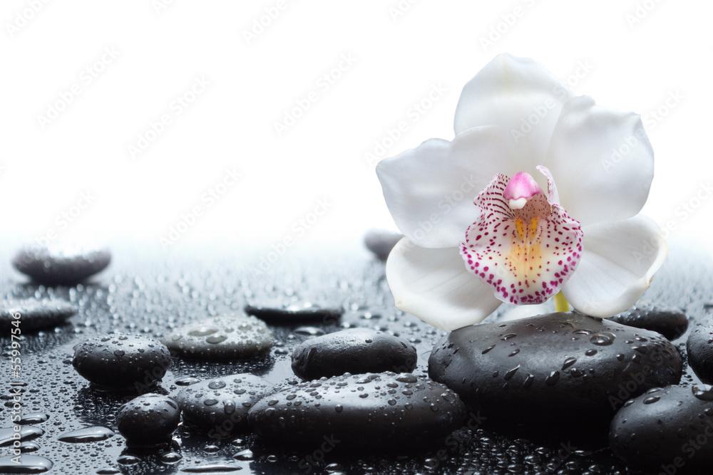 impression photo sur verre white orchid and wet black stones nikkel. Black Bedroom Furniture Sets. Home Design Ideas