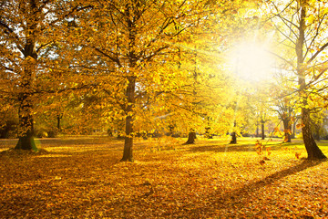 sunny autumn