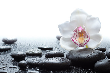 white orchid and wet black stones