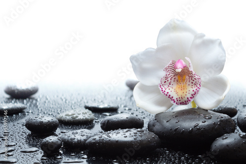 Papiers peints Orchidée white orchid and wet black stones