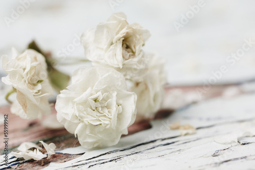 canvas print picture Small White Flower