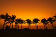 Coconut tree silhouette on paradise sunset on the beach.