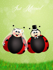 Wedding of ladybugs