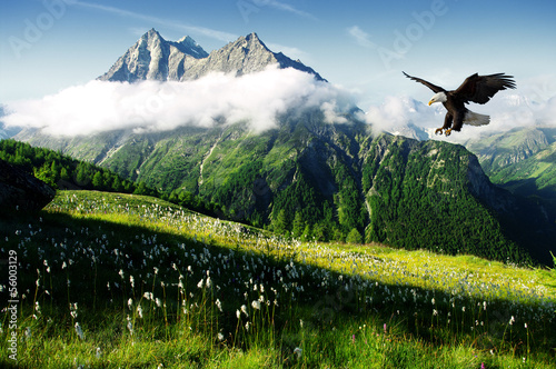 Tuinposter Canyon eagle in the Alps