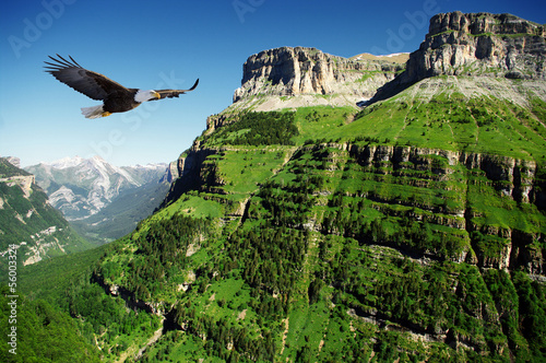 Tuinposter Canyon eagle in Ordessa Valley