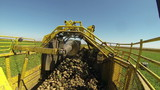 Harvesting Machine Harvesting Sugar Beet