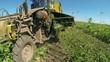 Sugar Beet Harvester in Action
