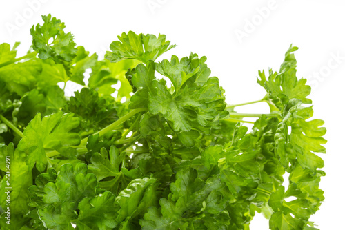 Ripe fresh Parsley
