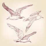 seagulls set hand drawn vector llustration realistic sketch