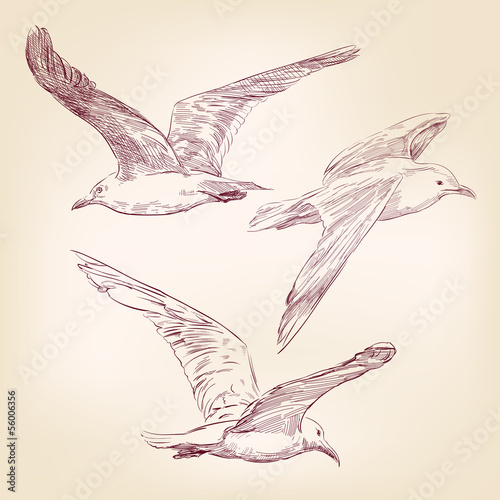 seagulls set hand drawn vector llustration realistic sketch - 56006356