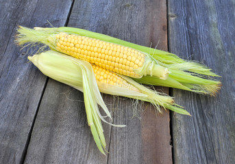 Organic fresh corn on wooden surface