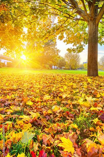 Zdjęcia na płótnie, fototapety na wymiar, obrazy na ścianę : Sunny autumn foliage