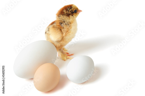 Chick with eggs