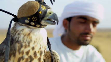 Portrait Peregrine Falcon Balanced Arabic Male Owners Glove
