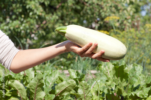 female hand holding marrow