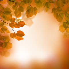 Autumn leaves, blurred background