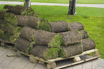 Lawn grass twisted into rolls