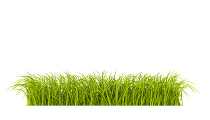 striscia d'erba