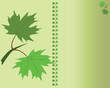 Vector of postcard with leafs