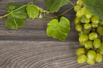 vine on a wooden background