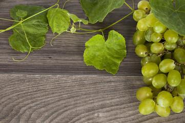 vine on a wooden background