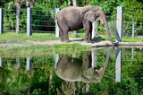 Pachyderm reflection poster