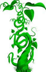 green beanstalk