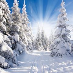 sonniger Winterwald