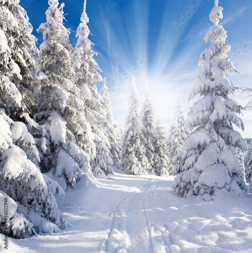canvas print picture sonniger Winterwald