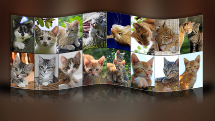 Katzencollage