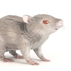 3d render of white mouse