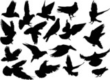 eighteen dove silhouettes isolated on white