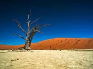 Baum in namibischer Wüste