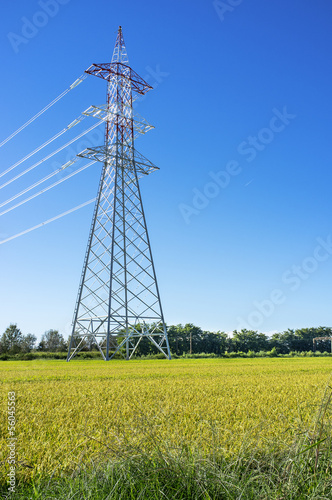 Lomellina-Mature rice field with electricity pylon color image