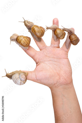 Garden Snails on the human hand