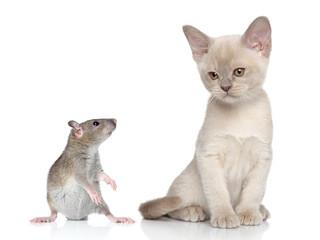 Rat and kitten portrait
