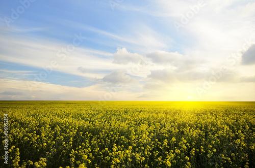 Fototapeten,himmel,pewter,sonnenuntergänge,sunrise