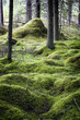 Mossy pine forest