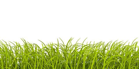 cornice di erba