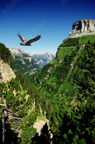 Tuinposter Canyon vulture flying in Ordessa valley