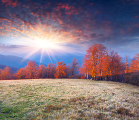 Colorful autumn morning in the mountains.