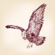 Eagle - vector illustration hand drawn
