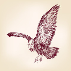 Eagle - vector illustration hand drawn
