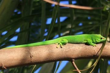 lézard vert sur une branche
