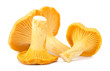 Yellow chanterelle isolated on white background