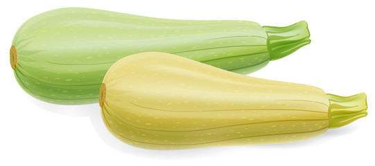 Two marrow zucchini isolated